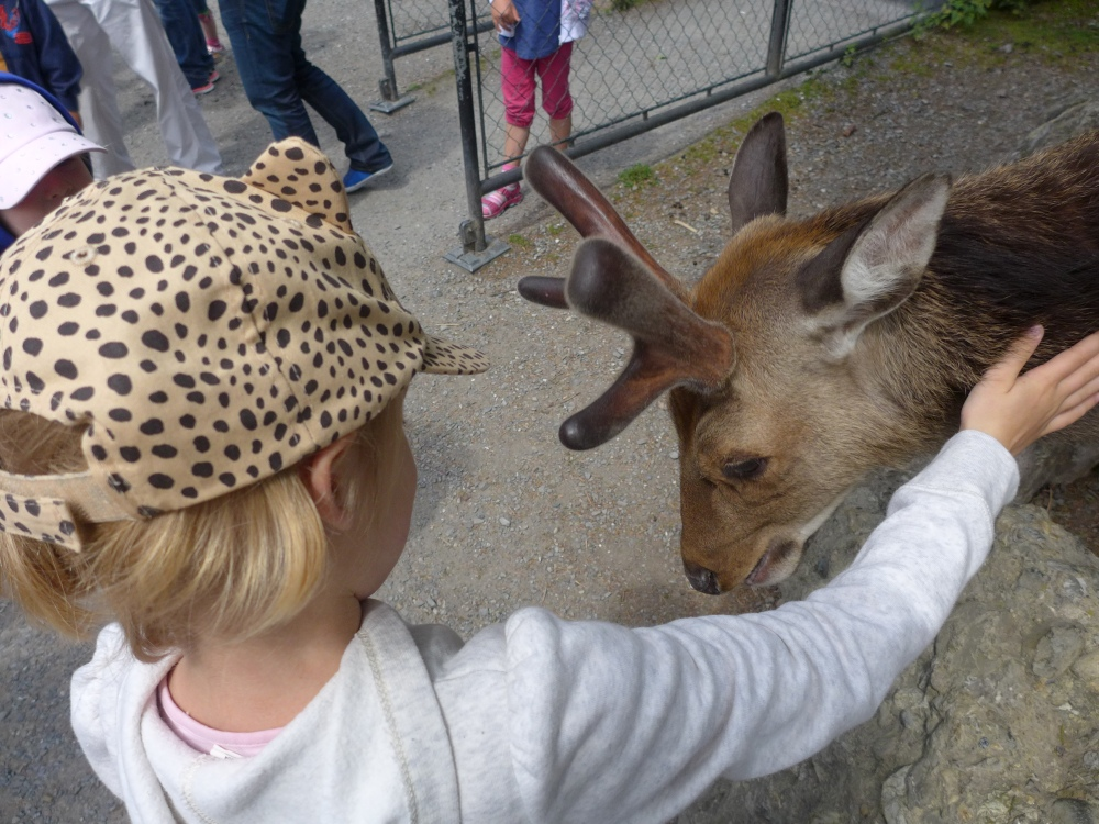 Small child harassing greedy deer